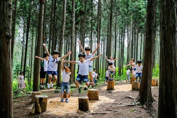 편백숲 우드랜드 4.jpg