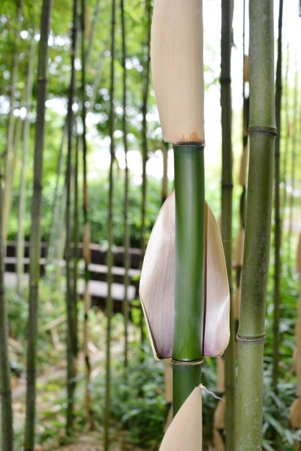 (6.12)담양군, 도대체 한국대나무박물관에 뭐가 있길래1.jpg