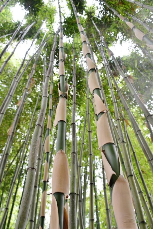 (6.12)담양군, 도대체 한국대나무박물관에 뭐가 있길래2.jpg