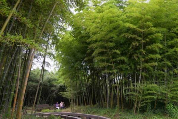 (6.12)담양군, 도대체 한국대나무박물관에 뭐가 있길래5.jpg