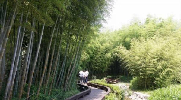 (6.12)담양군, 도대체 한국대나무박물관에 뭐가 있길래6.jpg