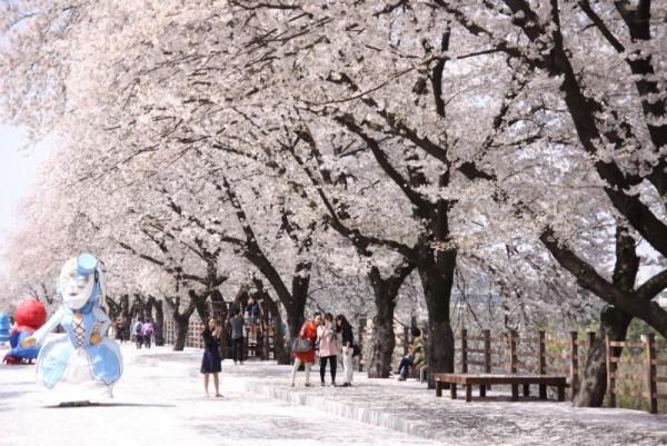 [크기변환]안동 벚꽃축제.JPG
