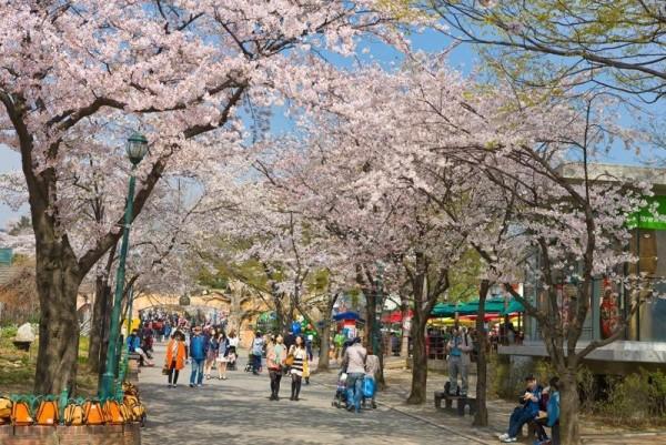 [크기변환](사진1) 서울어린이대공원 벚꽃축제.jpg