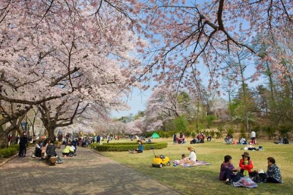 [크기변환](사진2 서울어린이대공원 벚꽃축제).jpg