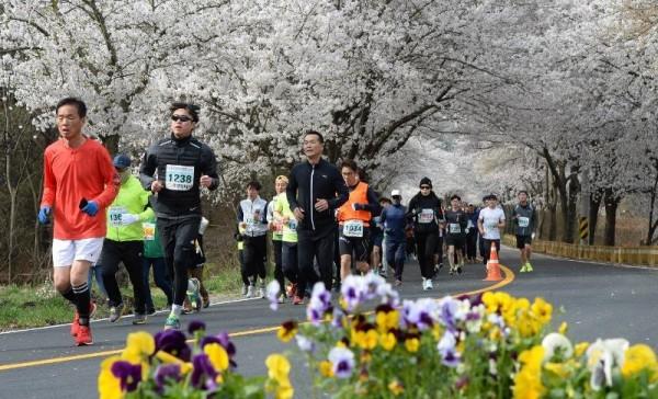 [크기변환]대전 환상의 벚꽃 드라이브 코스는 어디_참고사진(지난해 물사랑 대청호 마라톤) (3).jpg