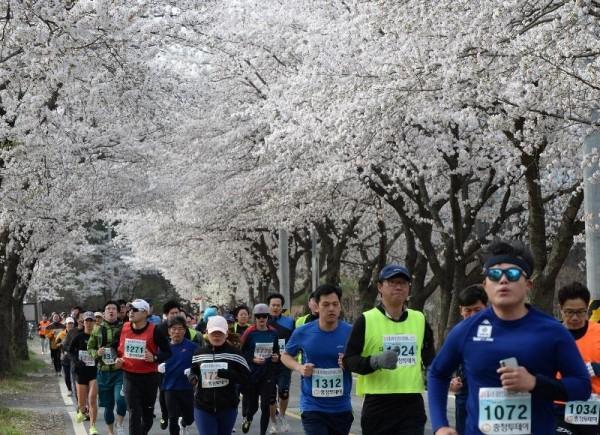 [크기변환]대전 환상의 벚꽃 드라이브 코스는 어디_참고사진(지난해 물사랑 대청호 마라톤) (2).jpg