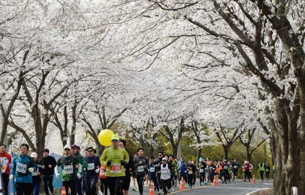 [크기변환]대전 환상의 벚꽃 드라이브 코스는 어디_참고사진(지난해 물사랑 대청호 마라톤) (1).jpg