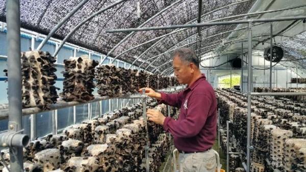 [크기변환]목이버섯 재배시설.jpg