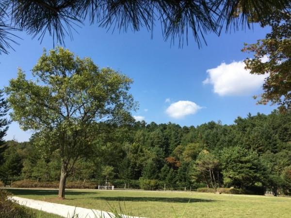 [크기변환]가을이 깊어가는 미동산수목원으로 (2).JPG