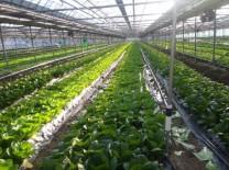 2021 친환경농업직불금 30일까지 접수