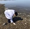 충남 서해안 비브리오패혈증균 첫 검출