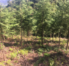 곡성군, 건강하고 우량한 숲 만들기 전력질주!
