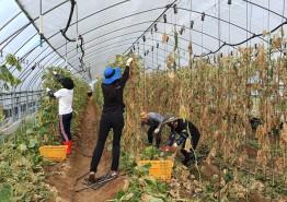 충북도, 보건복지국 직원 농촌일손돕기
