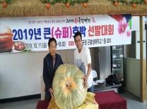 함평군 '2019 슈퍼(큰)호박 선발대회'