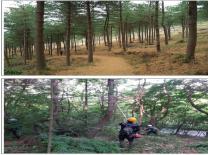건강한 숨! 푸른 숲의 도시'대구 만들기, 성과로 나타났다