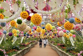 '장성 홍길동축제'는 끝났지만 꽃의 향연은 계속된다