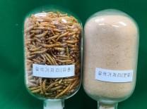 전남농업기술원, 식용곤충 수출로 농가소득 견인