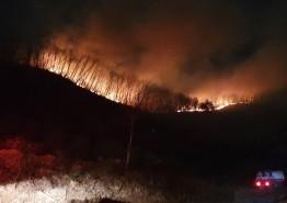 논산 벌곡 산불 14시간 만에 진화 완료