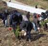 구례군, 제74회 '새산새숲' 식목일 기념 나무심기 행사