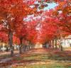 도심 속에서 가을의 정취와 낭만을 만끽하세요!