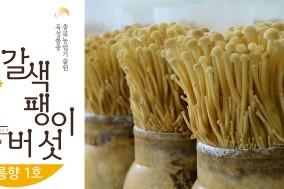 충북농기원, 갈색 팽이버섯 포장 디자인 특허출원