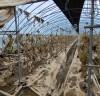 곡성군 하우스 단지, 폭우 피해로 재배농가 시름