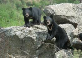 구례군, 90억원 규모 반달가슴곰 생츄어리 공모사업 확정
